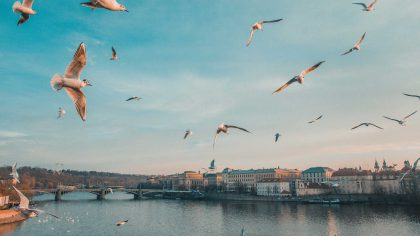 Prague with flying seagulls