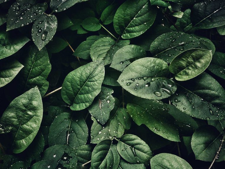 Wet leafs